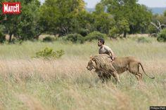 En Afrique du Sud, à 80 kilomètres de Johannesburg, Kevin Richardson détient le secret du langage des fauves au point de faire partie de leur meute. I...
