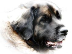 Portrait of an adult Leonberger