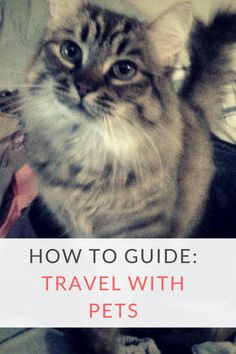 How to Move Your Pet to Another Country - Travel Pray Love