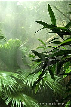 I want to visit a rain forest.