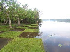Geoffrey Bawa. Lunuganga バワのルヌガンガの庭