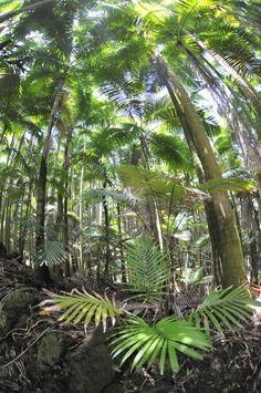 Rainforest                                                 Hawaii