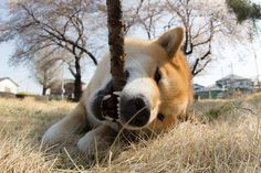 [Domesticated Animals] - [photography/nature/domestic] - Having fun - by: marustagram