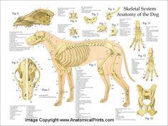"Dog Skeleton | Dog Skeletal Anatomy Poster - 18"" X 24"" (Laminated or Photo Paper)"