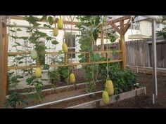 Mittleider Garden: Vertical Gardening Done Right
