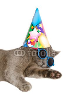 Studio portrait of funny chartreux cat. #Cat #Kitty #Kitten #Chartreux #HappyBirthday #Hat #Funny #Crazy #Pets #Animals #Sunglasses #Summer #Festive