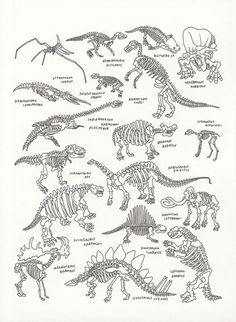 Dinosaurs at The American Museum of Natural History by Jason Polan ARTIST Dinosaurs Preschool, Dinosaur Activities, Dinosaur Crafts, Dinosaur Fossils, Dinosaur Art, Dinosaur Skeleton, Prehistoric Creatures, Irezumi, Jurassic Park
