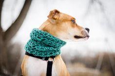 #gift <u>свитер, вязание для животных - Татьяна Усенко</u> #ideas for #pets #doglovers #petstories
