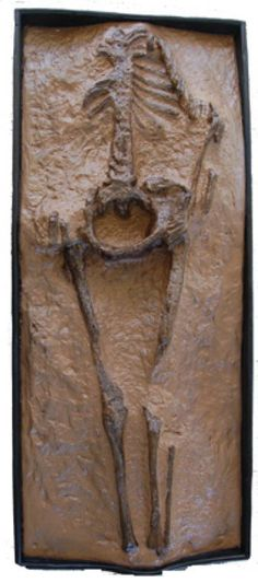 JOJO POST STAR GATES: DIFFERENT RESIDENTS OF THE PLANET EARTH??? The Mystery Of The 28 MILLION YEARS OLD  'Guadeloupe Woman'. WHAT DO YOU SEE?? What do you think?? WHAT DO WE KNOW?? British Museum. Click to read more.