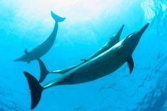 El presidente de Estados Unidos, Barack Obama, anunció el viernes la creación de la mayor reserva marina del mundo en su archipiélago natal de Hawái, con lo que aspira a consolidar su imagen de defensor del medio ambiente antes de dejar la Casa Blanca.</p>