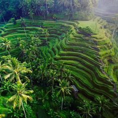 Tegalalang Rice Terrace Ubud Bali | Pinpanion