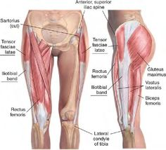 Tensor Fasciae Latae and Iliotibial band (these tend to tighten-up quite a bit - should be massaged and stretched)