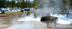 Jackson Hole and Yellowstone Winter Tours | Adventures By Disney
