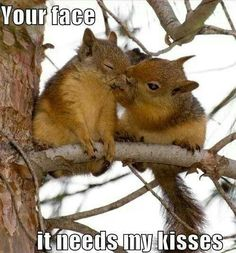 Your face. It needs my kisses