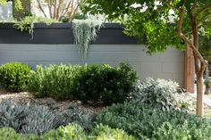 Why not try these out for information Backyard Diy Landscaping Diy Landscaping, Australian Native Garden, Flower Landscape, Plants, Landscape Design, Outdoor Gardens, Garden Planning, Australian Garden, Landscaping Plants