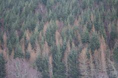 Highlands, Aviemore. Foresta caledoniana nel Cairngorms Park