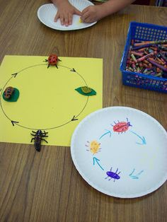 Chalk Talk: A Kindergarten Blog: Ladybug Research