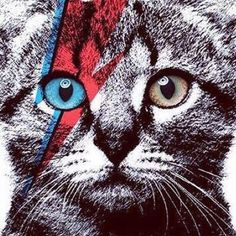 Would anyone be interested in a Bowie Cat t-shirt?