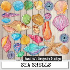 Sea shells clipart  Pretty clip art set with hand painted watercolor sea shells in beautiful colors. These images can be used for all kinds of projects, like blogs, social media, websites, printing and scrapbooking. Have fun!  - Sandra -----------------------------------------------------------------------------------------------------------------------------------  ► This what you get: 26 images, PNG files 300dpi  The files vary in size and are approximately between 1,5 and 4 inch (4 and 10…