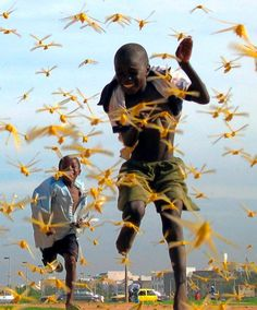 REUTERS  Senegalese children run as locusts spread in the capital Dakar on Sept. 1, 2004 during the worst locust plague in 15 years.