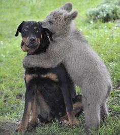 cute animal couples
