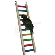 Paradise Toys 24 Inch Parrot Ladder. http://tabletpromo.org/viewdetail.php?asin=B003PLASGM