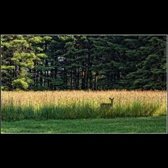 Deer...Wild, Wonderful West Virginia