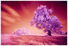 http://www.celitel-anastasiya.ru -- Кто видит счастье в обретении материальных благ, те никогда не смогут стать по-настоящему счастливыми.     http://www.celitel-anastasiya.ru -- Радуйтесь тому, что у вас есть куда идти и к чему стремиться.     http://www.celitel-anastasiya.ru -- Как мало человеку надо, чтобы жить счастливо! Поэтому, не сотвори себе нужды.     http://www.celitel-anastasiya.ru -- Иные живут счастливо, сами того не зная.     http://www.celitel-anastasiya.ru -- Ни один человек…