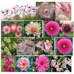 Late August pinks for a garden wedding August Flowers, Garden Wedding, Plants, Pink, Instagram, Flora, Plant, Pink Hair, Planting