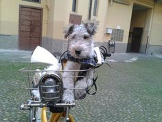 Arthur rides a bike with Carlo every morning in Milano