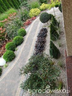 Na zielonej... trawce :) - strona 522 - Forum ogrodnicze - Ogrodowisko