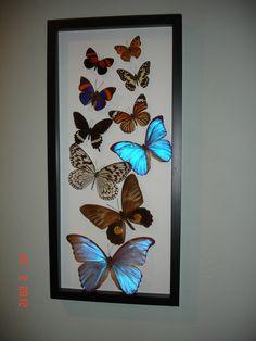 real butterflies in frame. DIY