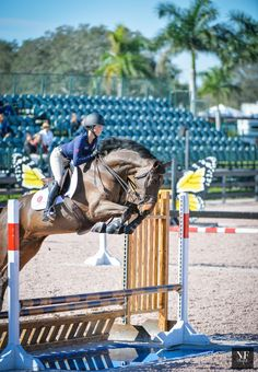 Beezie's Building Blocks at the GHM Horsemastership Session