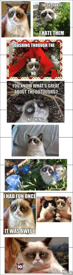 Tard the Grumpy Cat. I don't even know where to categorize this, I just know I love this cat so much.
