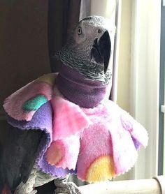 20 Best Bird Collars For Parrot Plucking Images Parrot Bird Pet