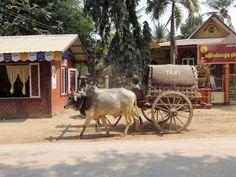 Okolice Mandalay, czyli dawne stolice królestwa - Cel w podróży Mandalay, Animals, Animales, Animaux, Animal, Animais