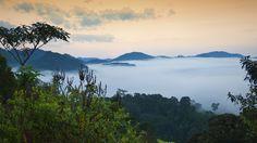 Du forbinder kanskje Rwanda med et mørkt kapittel i verdenshistorien, men tar du turen i 2016 får du se resultatet av en ekstraordinær utvikling som har ført til at reisende igjen kan nyte landet i all sin prakt. Hos KILROY finner du billige reiser til Rwanda!