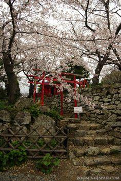 Red shrine gates right next to Hamamatsu Castle.