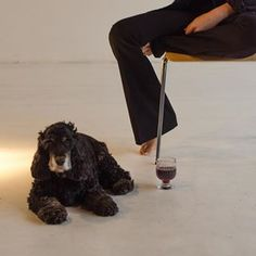 a woman, a dog and wine in a water glass Water Glass, Wine, Woman, Dogs, Photography, Instagram, Decor, Photograph, Decoration