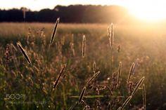 Sunset Field by schuhmannjana  http://ift.tt/2ldfx2m
