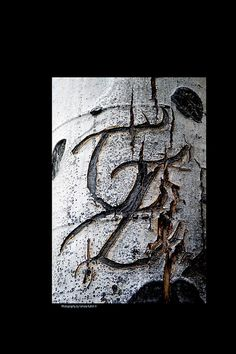 Ah, the old days of carving initials into a tree to show someone you love them! Now you don't have to! Here's some old initials, which look like abstract art now with the hand of time on one of the Aspen Trees high above Santa Fe, New Mexico!  #kulish, #tamara, #carving, #tree, #aspen, #woods, #FAA, #fineartamerica, #reproduction, #print, #framing