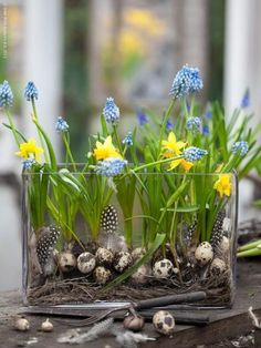 Frühling | #spring #easter #decoration #dekoration #blumen #flowers #arrangement