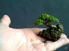 Mame bonsai on a rock by Jemmy Liauw.