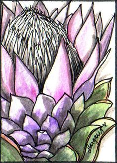 PROTEA CYNOROIDES | Flickr - Photo Sharing! Line Drawing, Painting & Drawing, Protea Art, Floral Drawing, Zentangle, Art N Craft, Cactus, Calla Lily, Art Forms