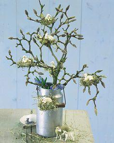 op een tak van een magnolia nestjes maken