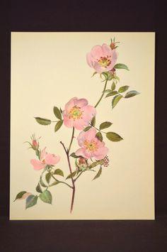 Pink Rose Print Rose Flower Print Floral Plate Dog Rose