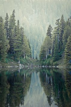 Forest, mountains, nature, Graphic Design, creative, visual, inspiration