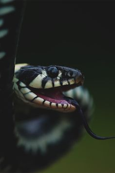 Snakes prefer to avoid to save yourself, you never know what they have in mind.
