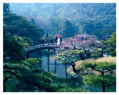 Japanese tea garden beauty