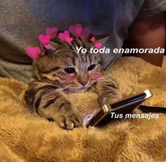 - even meme de amor Tags: , , , - Romantic Memes, Memes Lindos, Tumblr Love, Cute Love Memes, Love Phrases, Romance, Sad Love, Wholesome Memes, Meme Faces